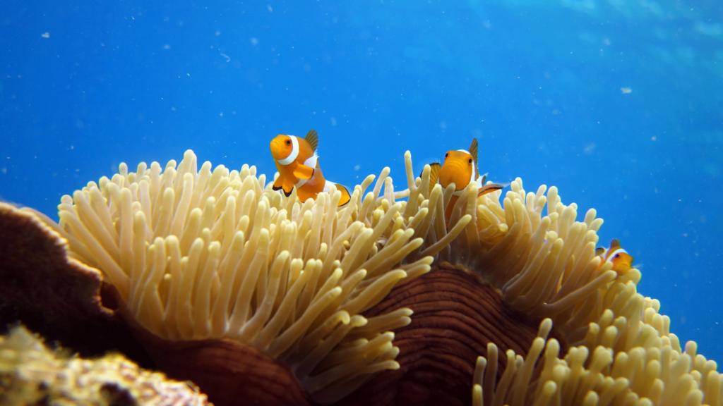 solcreme i havet koraller