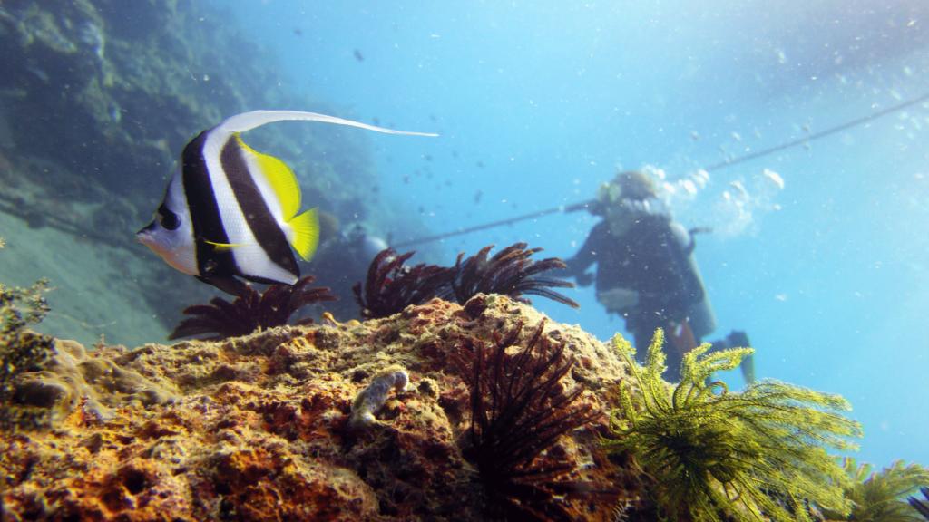 solcreme i havet fisk
